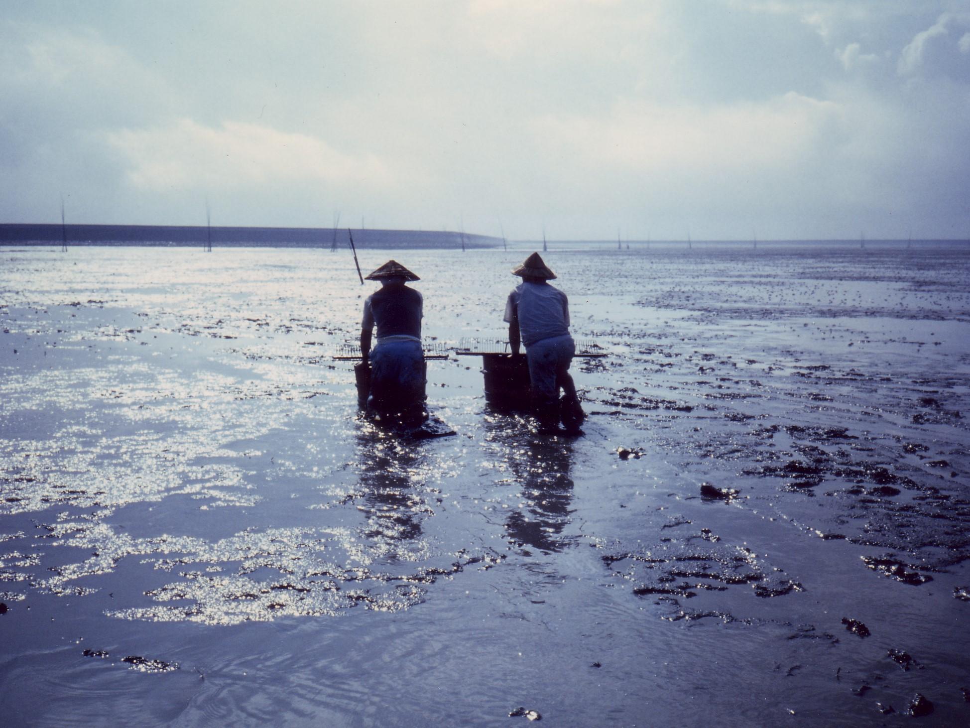 有明海の干潟漁